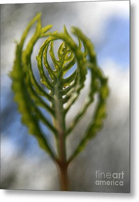 Unwrapped Metal Print