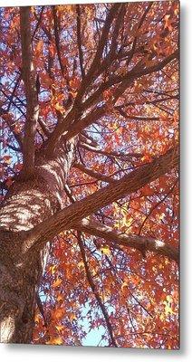 Up A Tree  Metal Print by Kiara Reynolds