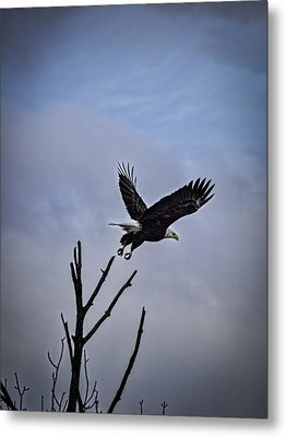 Up And Away  Metal Print by Thomas Young
