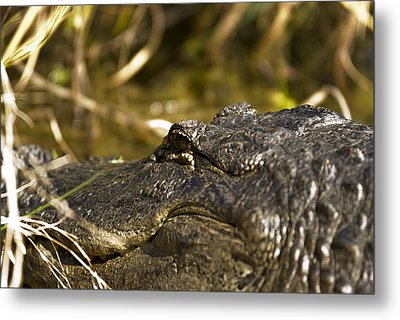 Up Close And Personal Metal Print by Frank Feliciano