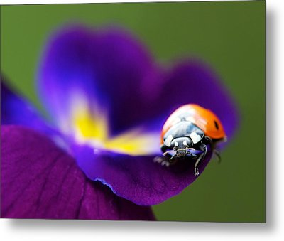 Up Close And Personal Metal Print by Lisa Knechtel