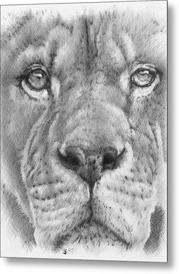 Up Close Lion Metal Print by Barbara Keith
