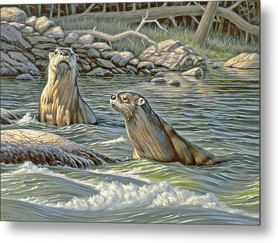 Up For Air - River Otters Metal Print by Paul Krapf