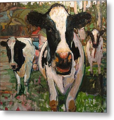 Up Front Cows Metal Print