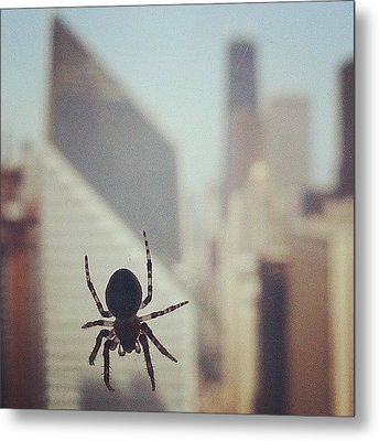 Up Here With The Spiders Metal Print by Jill Tuinier