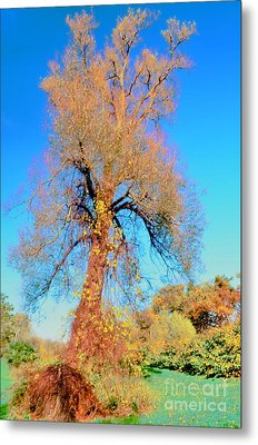 Up Rooted Tree Metal Print by Kathleen Struckle