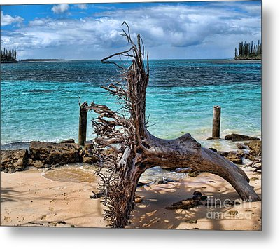 Metal Print featuring the photograph Up Rooted by Trena Mara