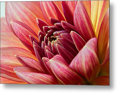 Uplifting 2 Metal Print by Mary Jo Allen