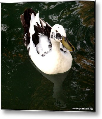 Upon Reflection Metal Print by Misty Herrick