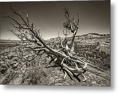 Metal Print featuring the photograph Uprooted - Bryce Canyon Sepia by Tammy Wetzel