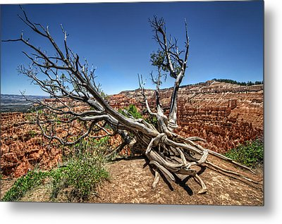 Metal Print featuring the photograph Uprooted - Bryce Canyon by Tammy Wetzel