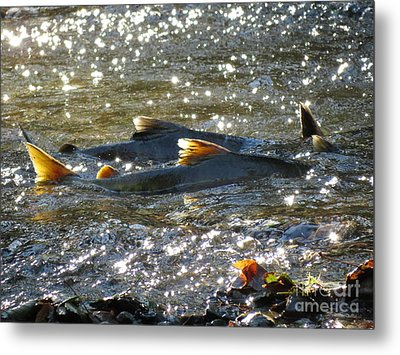 Upstream Metal Print by Gayle Swigart