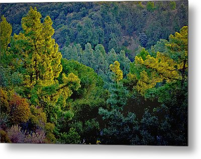 Metal Print featuring the photograph Urban Forrest by Joseph Hollingsworth