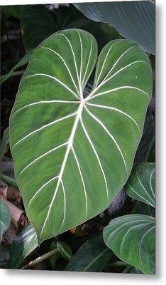 Us Botanic Garden - 121212 Metal Print