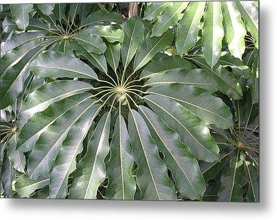 Us Botanic Garden - 121218 Metal Print