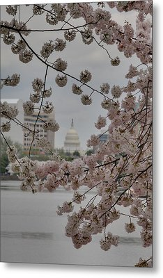 Us Capitol - Cherry Blossoms - Washington Dc - 01137 Metal Print by DC Photographer