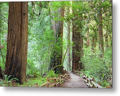 Usa, California Trail Through Muir Metal Print by Jaynes Gallery