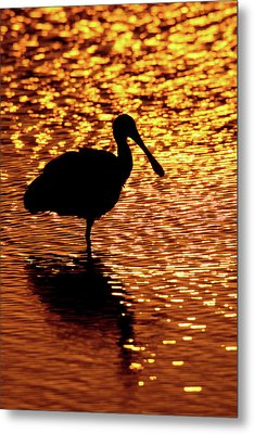 Usa, Florida, Vierra Wetlands Metal Print by Jaynes Gallery