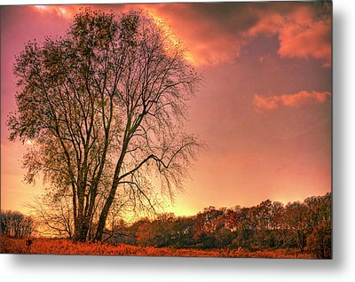 Usa, Indiana Giant Tree In Prophetstown Metal Print