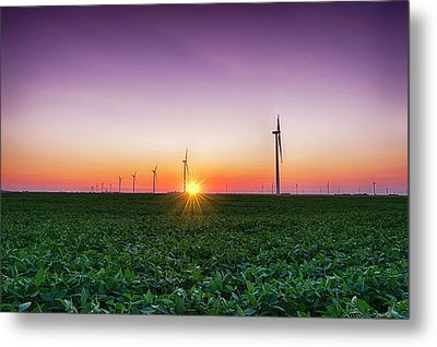 Usa, Indiana Soybean Field And Wind Metal Print by Rona Schwarz