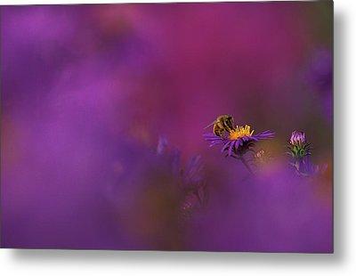 Usa, Michigan, Honeybee Pollinating New Metal Print