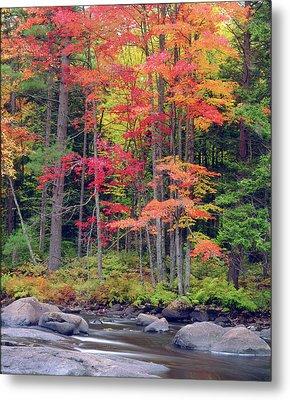 Usa, New York, Autumn In The Adirondack Metal Print