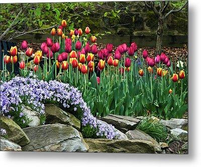 Usa, Ohio Tulips And Phlox Metal Print