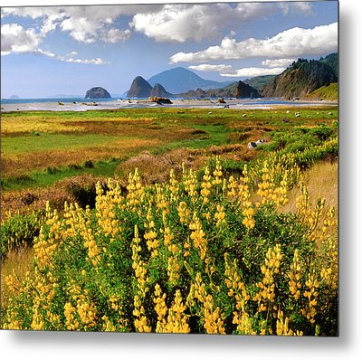 Usa, Oregon Landscape Of Yellow Lupine Metal Print by Jaynes Gallery