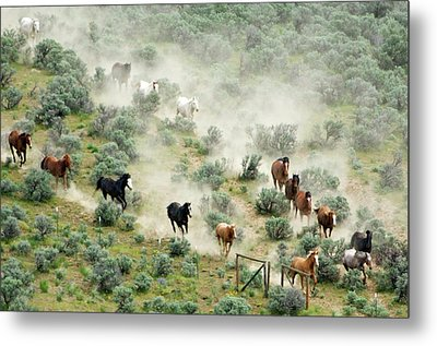 Usa, Washington, Malaga, Running Horses Metal Print