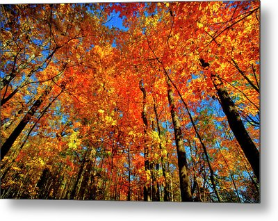 Usa, West Lafayette, Indiana, Trees Metal Print by Rona Schwarz