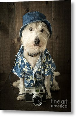 Vacation Dog Metal Print