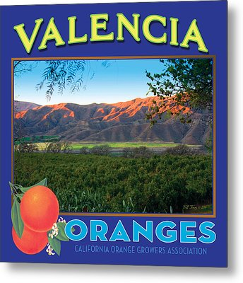 Valencia Oranges Metal Print by Bill Jonas