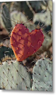 Valentine Prickly Pear Cactus Metal Print