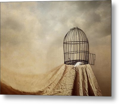 Vanishing Act Metal Print by Amy Weiss