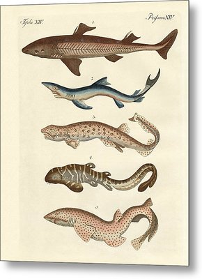 Various Kinds Of Sharks Metal Print