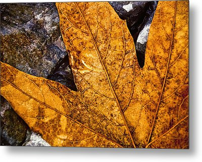 Metal Print featuring the photograph Veins by Anthony Citro