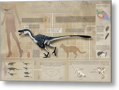 Velociraptor Infographic Metal Print