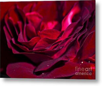 Velvet Red Rose Metal Print by Jan Bickerton