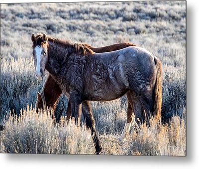 Velvet - Young Colt In Sand Wash Basin Metal Print