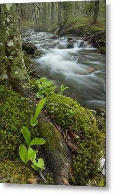 Vermont Waterfall Forest River Brook Metal Print by Andy Gimino