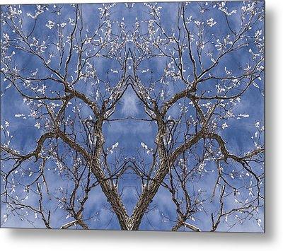 Vermont Winter Mirror Trees Snow Sky Metal Print