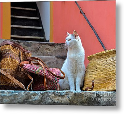 Vernazza Shop Cat Metal Print