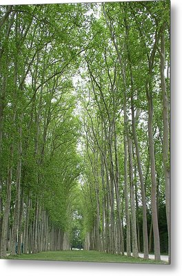 Metal Print featuring the photograph Versailles Tree Garden 2005 by Cleaster Cotton