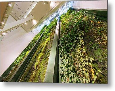 Vertical Garden Metal Print by Louise Murray