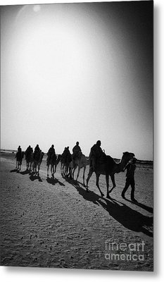 vertical hot sun beating down on sands and camel train in the sahara desert at Douz Tunisia Metal Print by Joe Fox