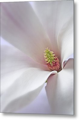 Vertical White Flower Magnolia Spring Blossom Floral Fine Art Photograph Metal Print by Artecco Fine Art Photography