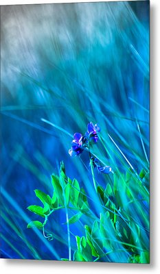 Metal Print featuring the photograph Vetch In Blue by Adria Trail
