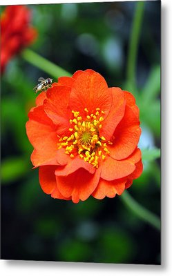 Metal Print featuring the photograph Vibrant Pop Of Orange by Kelly Nowak