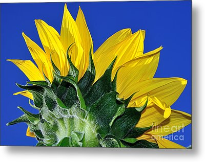 Vibrant Sunflower In The Sky Metal Print by Kaye Menner