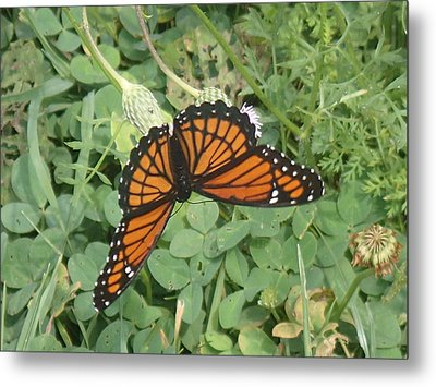 Metal Print featuring the photograph Viceroy by Robert Nickologianis